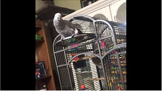Parrot hears dog barking, calls him a