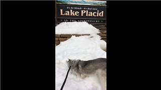 Husky finds snow in summer, goes ballistic - Video