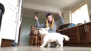 Talented Westie performs incredible dog tricks - Video