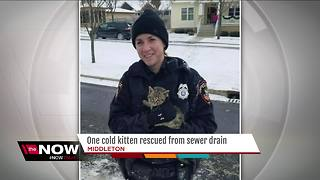 Pawblic service: Middleton police officer saves kitten from storm drain - Video