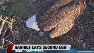 2nd egg laid at eagle cam nest - Video