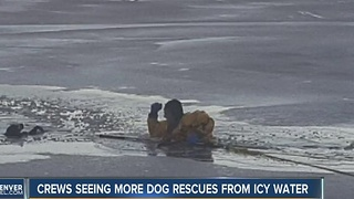 Dogs rescued from icy ponds - Video