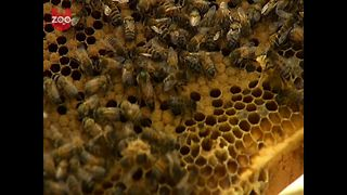 Bees Book Into Hotel - Video