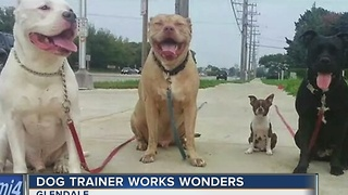 Local dog trainer works wonders - Video