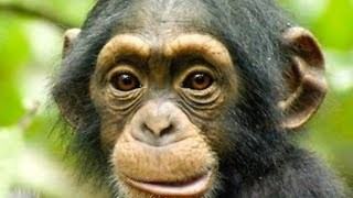 10 Most Intelligent Animal Species - Video