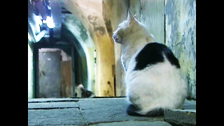 Cats Guard Museum - Video