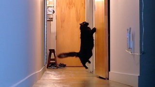 There are 2 kinds of cats in this world - Video