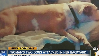Woman's two dogs attacked in her backyard - Video