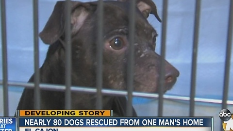 Nearly 80 dogs rescued from man's East County home
