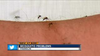 Bugging off mosquitoes amid frequent rains - Video