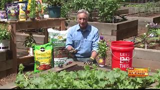 Edible gardening tips - Video