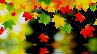 Wonderful Colors of Autumn - Video