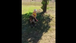 Toddler riding dog results in epic fail! - Video