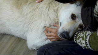 Rescue of homeless dog suffering from cancer who only wanted to be hugged - Video