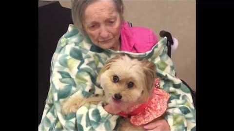 Therapy Pets Visit a Veterans' Home