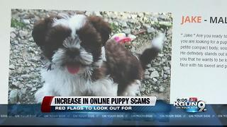 Oro Valley Police warn public about online puppy scams - Video