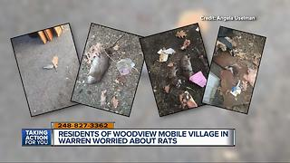 Residents of Woodview Mobile Village in Warren worried about rats - Video