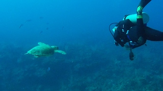 Endangered sea turtle appears from the deep to examine diver - Video