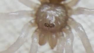 Up-close footage of newborn tarantula hatchlings! - Video