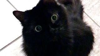 Cat's Eyes Hilariously Light Up When Owner Says Magic Word - Video