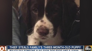 Family has 3-month-old puppy stolen - Video