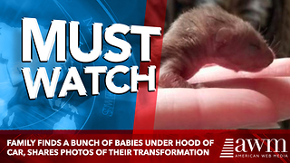 Family Finds A Bunch Of Babies Under Hood Of Car, Shares Photos Of Their Transformation - Video