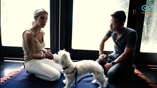 A Life Coach For Dogs And Their Celebrity Owners!