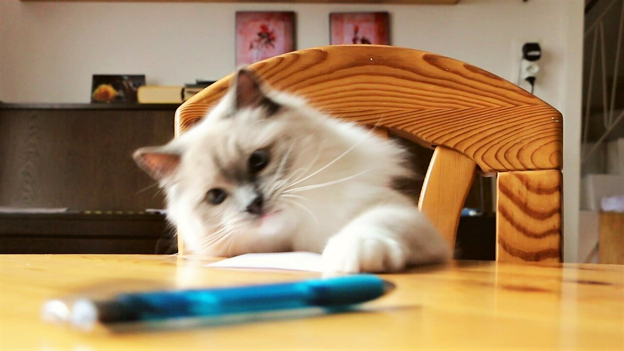 Admirable Rude Cat Repeatedly Knocks Pens Off Table Interior Design Ideas Gentotthenellocom