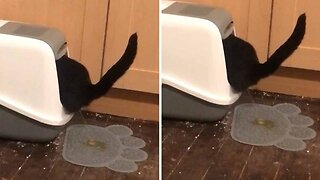 Cheeky Cat Pees Outside Litter Box