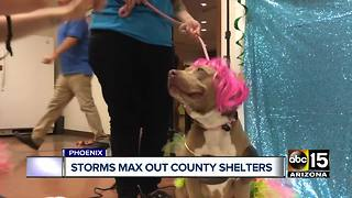 Maricopa County animal shelters maxed out following monsoon storms - Video