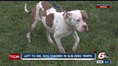 Dog left chained to table in sub-zero temperatures left to die