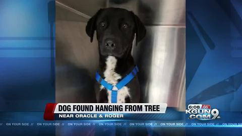 Family who saved helpless dog hanging by neck speaks about rescue