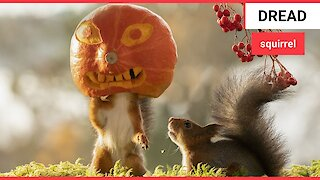 Photographer captures cheeky squirrels getting in the Halloween spirit
