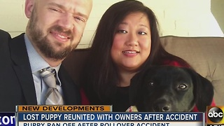 Dog reunited with her family after Flagstaff crash