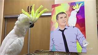 Parrot admires its portrait with owner