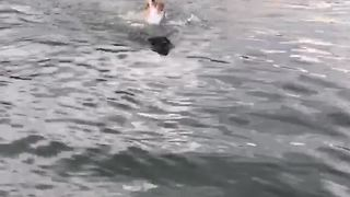 Swimming Dog Helps Other Dog In The Water - Video