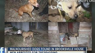 Malnourished dogs found in Brooksville house - Video