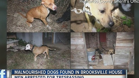 Malnourished dogs found in Brooksville house