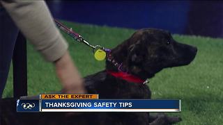 Ask the Expert: Thanksgiving pet safety tips - Video