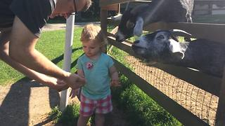 Adorable Baby Girl Feeds Farm Animals