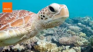 Celebrate World Turtle Day - Video