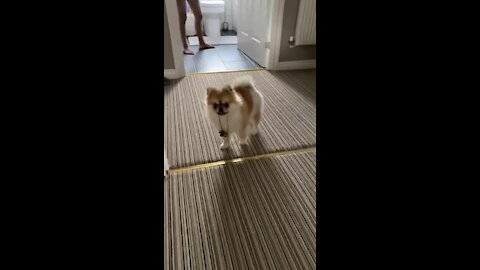Excited pup with zoomies has crazy energy