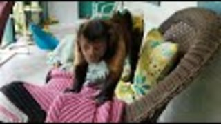 Davie the Capuchin monkey is scared of the bubble machine.  - Video