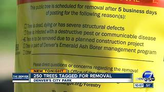City Park Golf Course redesign unveiled, 261 trees marked for removal - Video