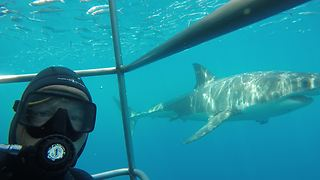 Epic Underwater Selfie With Great White Shark - Video