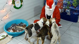 Homeless Rescued Dogs Surprised With A Very Special Party - Santa Paws Invited - Video