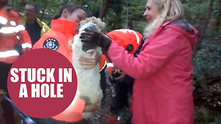 Jack Russell rescued from 9ft deep badger sett - Video