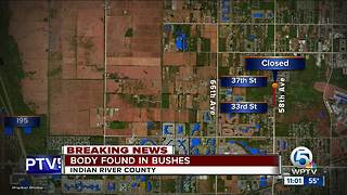 Detectives investigating body found in bushes in Indian River County - Video