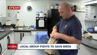 Local group wants downtown businesses to flip the switch to save migrating birds - Video