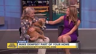 Feb. 3 Rescues in Action: Make Dempsey part of your family - Video